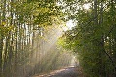 Lumière de forêt Photographie stock libre de droits