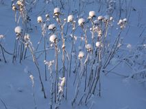 Lumière de l'hiver Images stock