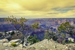 Lumière de matin au canyon grand Photo libre de droits