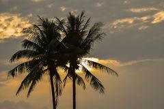 Lumière de matin avec des ombres des arbres de noix de coco Image stock