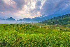 Lumière de matin dans la terrasse de riz du paysage du Vietnam Photos libres de droits