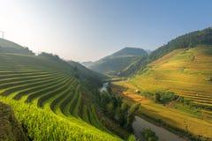 Lumière de matin de riz sur la terrasse au paysage du Vietnam Image libre de droits