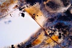 Lumière de Moss Agate Photo libre de droits
