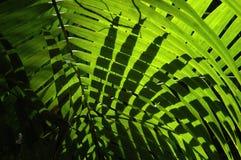 Lumière de natures Photo libre de droits