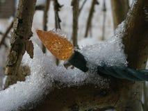 Lumière de Noël dans la neige dans un arbre image stock