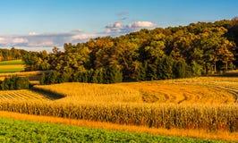 Lumière de soirée sur des champs de ferme dans le comté de York rural, Pennsylvanie Images libres de droits