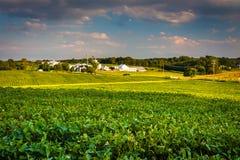 Lumière de soirée sur des champs de ferme en Howard County, le Maryland Image libre de droits