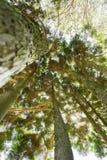 Lumière de Sun par des cimes d'arbre photographie stock libre de droits
