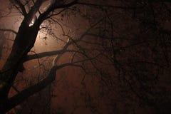 Lumière derrière l'arbre Photos libres de droits