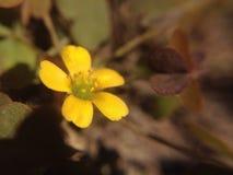 Lumière du jour de yellowflower de lumière du soleil de fleur de nature Photos stock