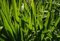 Lumière du jour ensoleillée de plan rapproché d'herbe verte image stock