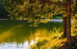 Lumière du soleil, arbres et lac Photographie stock libre de droits