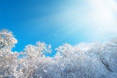 Lumière du soleil au-dessus de oakforest pendant l'hiver Photos libres de droits