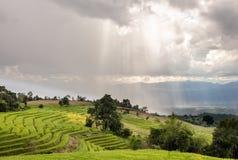 Lumière du soleil avec le gisement de riz de terrasse Photos stock