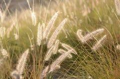Lumière du soleil brillant au-dessus de l'herbe Images libres de droits