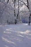 Lumière du soleil brillant par des arbres couverts de gelée le long d'une traînée de marche images libres de droits