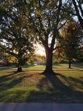 Lumière du soleil brillant par des arbres en parc au coucher du soleil Image stock
