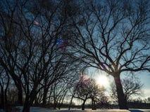 Lumière du soleil brillant par des branches d'arbre Photographie stock
