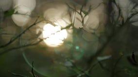 Lumière du soleil brillant par les branches, fond brouillé naturel, fond abstrait de nature clips vidéos