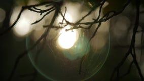 Lumière du soleil brillant par les branches, fond brouillé naturel, fond abstrait de nature banque de vidéos