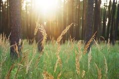 Lumière du soleil d'éclat par des arbres dans la forêt Image stock
