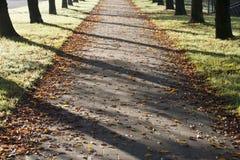Lumière du soleil d'automne Images stock
