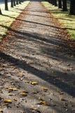 Lumière du soleil d'automne Photographie stock