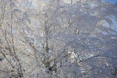 Lumière du soleil d'hiver photographie stock libre de droits