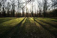 Lumière du soleil d'hiver dans la forêt Photographie stock