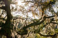 Lumière du soleil d'or par la mousse espagnole photo libre de droits