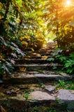 Lumière du soleil dans des escaliers 2 de pierre de forêt Photos libres de droits