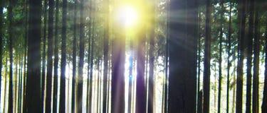Lumière du soleil dans la forêt photo stock