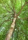 Lumière du soleil dans la forêt verte Photographie stock