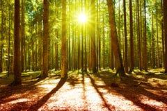 Lumière du soleil dans la forêt verte photo libre de droits