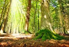 Lumière du soleil dans la forêt verte image stock