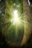 Lumière du soleil dans la jungle tropicale Photo libre de droits