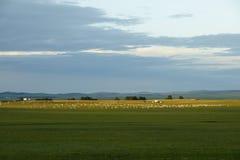 Lumière du soleil dans la prairie Images libres de droits