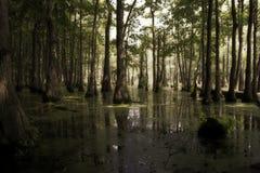 Lumière du soleil dans le marais Photographie stock