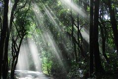 Lumière du soleil dans les bois Images libres de droits