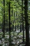 Lumière du soleil dans les bois Photo stock