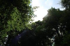 Lumière du soleil dans les bois Image libre de droits