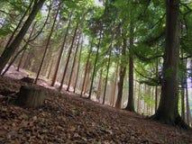 Lumière du soleil dans les bois Images stock