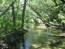 Lumière du soleil de Boise River filtrée à l'aide des arbres Photographie stock