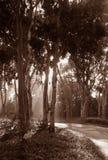 Lumière du soleil de forêt Photos stock
