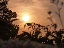 Lumière du soleil de matin Image libre de droits