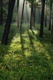 Lumière du soleil de matin dans la forêt photo stock