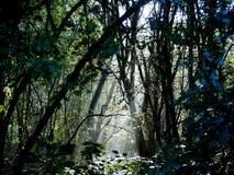 Lumière du soleil de matin dans la réserve naturelle près de Mortsel belgium Image libre de droits