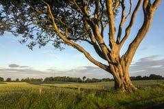 Lumière du soleil de matin dans le comté Antrim - Irlande du Nord image stock