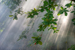 Lumière du soleil de matin en végétation Photos libres de droits