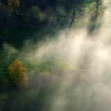 Lumière du soleil de matin par le brouillard et l'oiseau Images stock